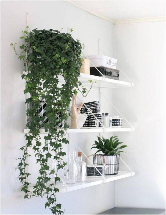 indoor vines