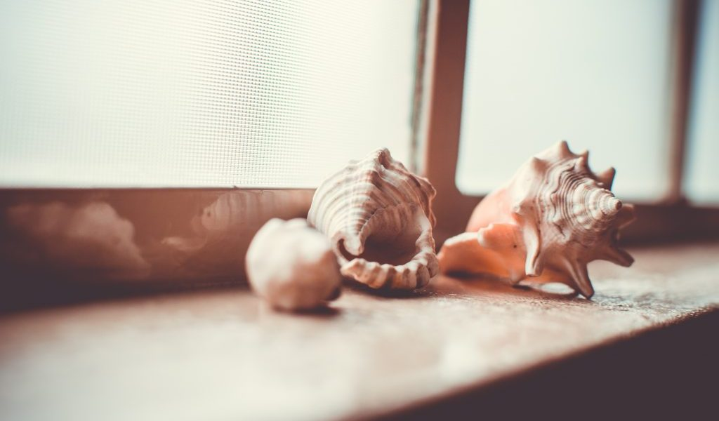 11 Unique Ways To Use Shells In Your Home Decor