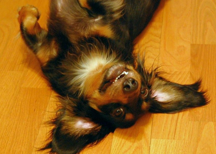 Pet Proofing Your Floors - Image By - MTSOfan - Via Flickr