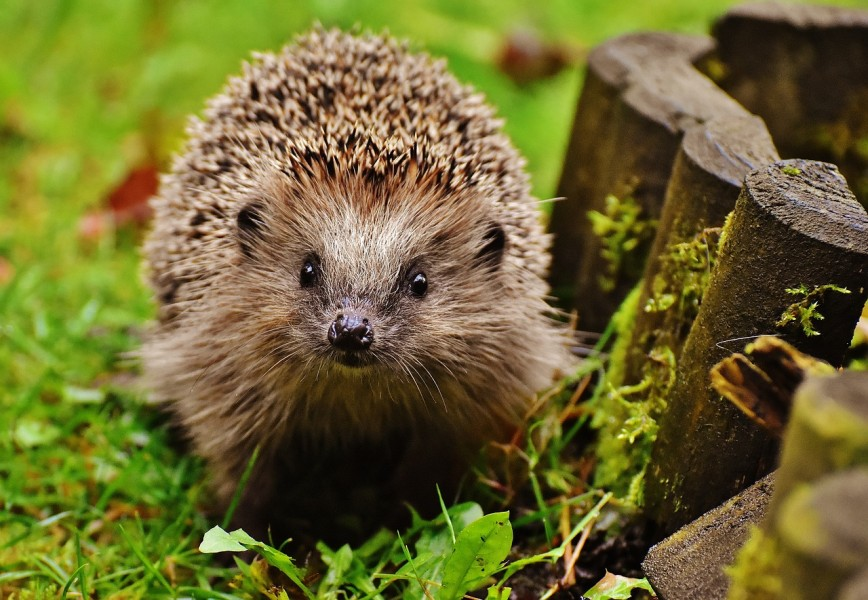 5 Ways To Make Your Garden Pop This Summer - Hedgehog