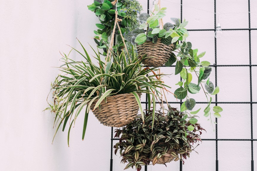 Plants In A Basket - 5 Botanical Looks For Your Bathroom