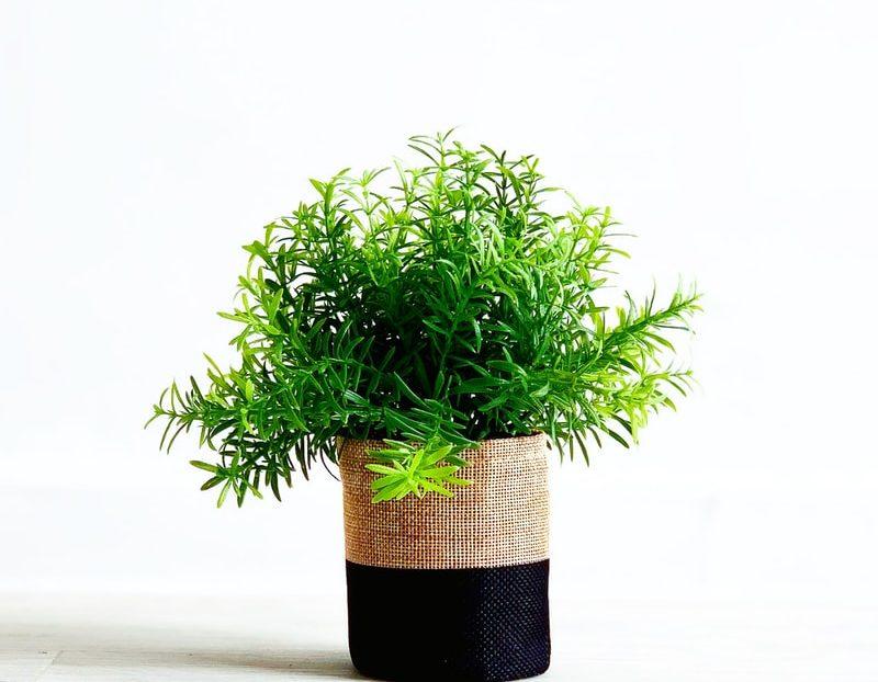 5 Botanical Looks For Your Bathroom