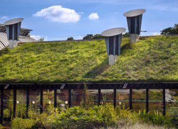 Grass Roof On Eco Building