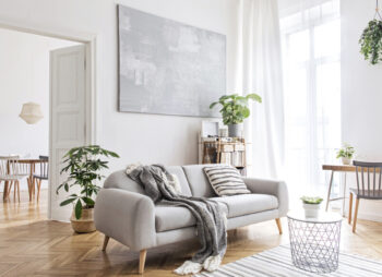 Living room with grey sofa and plants.