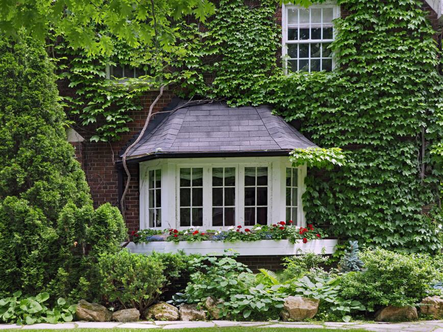 Bay window of older vine covered brick house