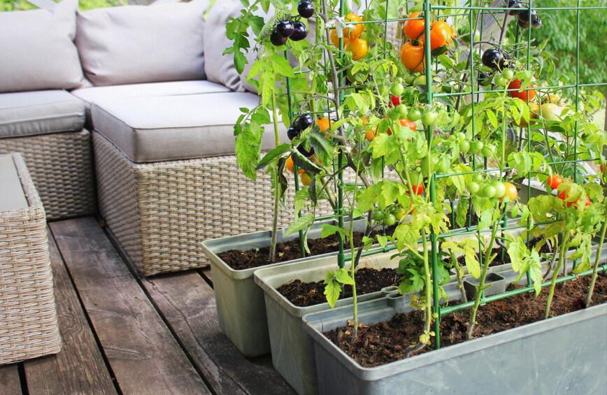 Garden Furniture and vegetable boxes