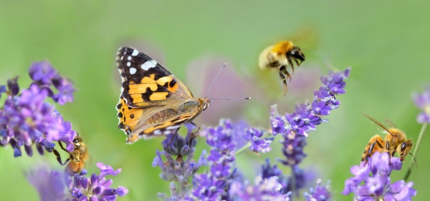 Five Pollinator-friendly Plants For Your Garden