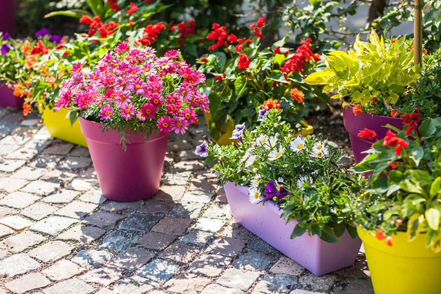 Colourful plants in plant pots placed on patio
